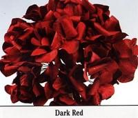 Parchment Hydrangea - Product Image