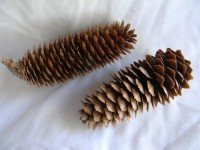 Norway Spruce  Natural - Product Image