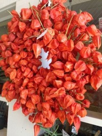 Chinese Lantern Wreaths - Product Image