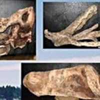 Driftwood - Product Image
