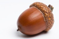 Large Acorns with Caps - Product Image