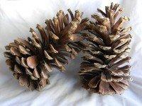 Longleaf Natural - Product Image