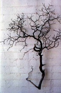 Manzanita Branches and Trees - Sandblasted