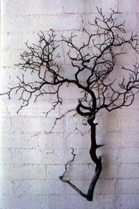 Manzanita Branches and Trees - Sandblasted