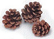 Red Pine Natural - Product Image