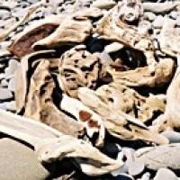 Sm Driftwood - Product Image