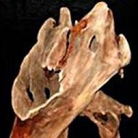 Specimen Driftwood - Product Image